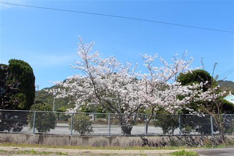 春2番(縮小475×316)