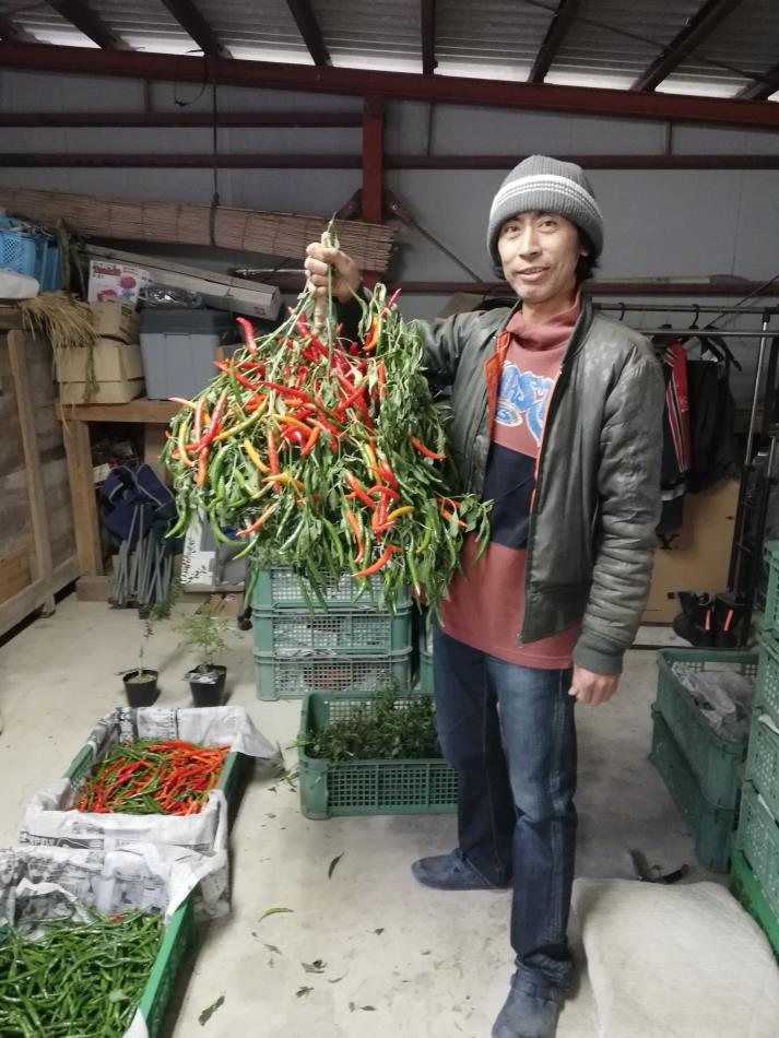 唐辛子、ミニトマトの瀧本農園に行ってきました