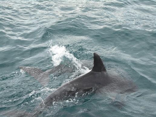 イルカのアップ