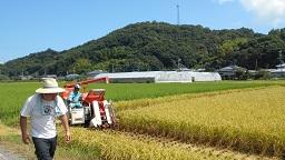 家族稲刈り 1