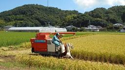 家族稲刈り 2