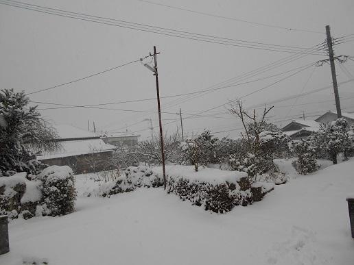 雪景色2016 1