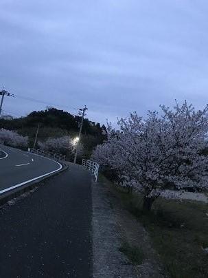 ちり行く桜