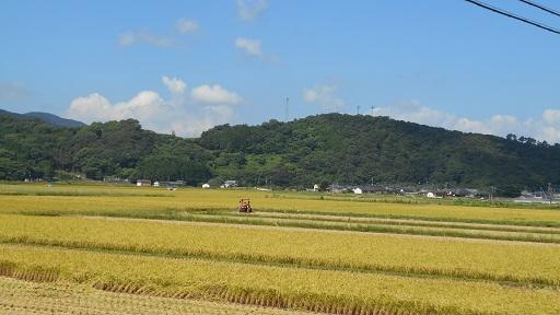 上津浦稲刈り 2