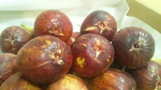 露地栽培の南蛮柿(いちじく)