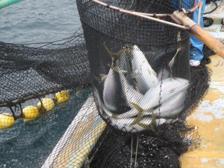 定置網漁3