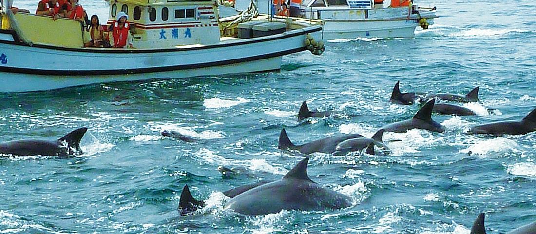 ミナミハンドウイルカの写真