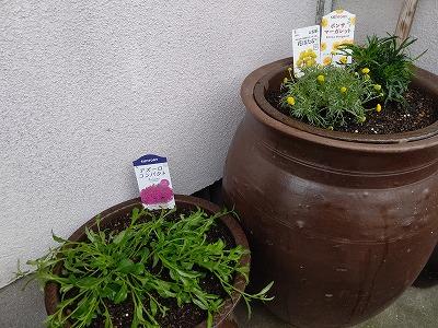 ウエルカムガーデン花植え