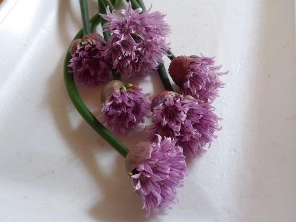 チャイブ花