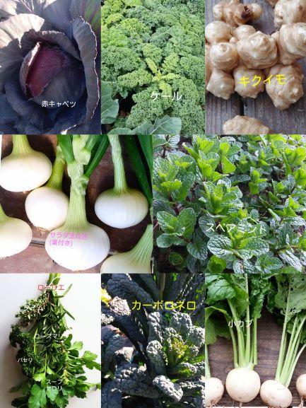 マルシェ用ハーブ野菜