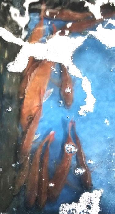 鯛ラバー❗️