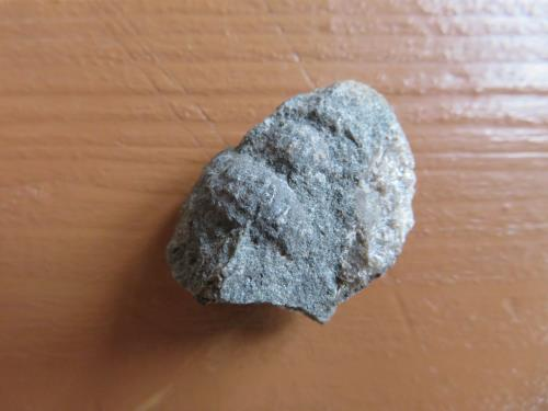 寄贈された化石の写真