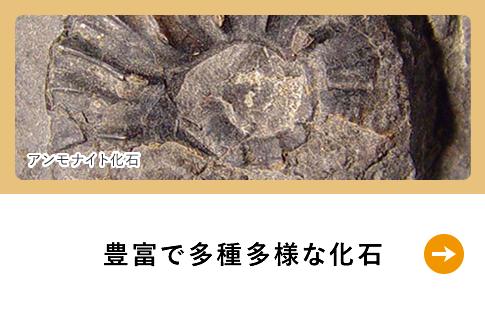 豊富で多種多様な化石