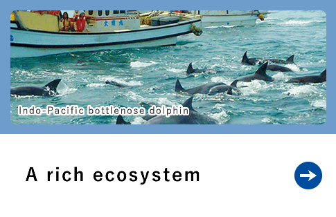 A rich ecosystem