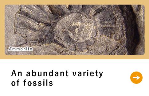 An abundant variety of fossils
