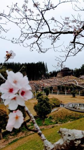 R3.3.19桜4