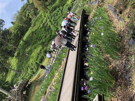 6月1日花菖蒲園4(縮小450×337)