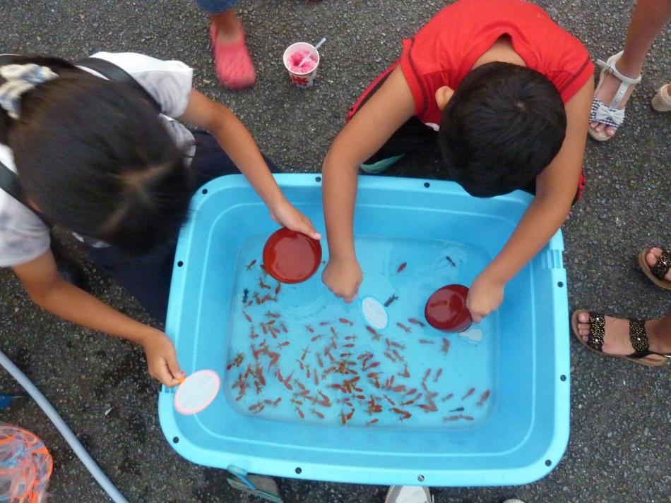 H29_夏祭り金魚すくい