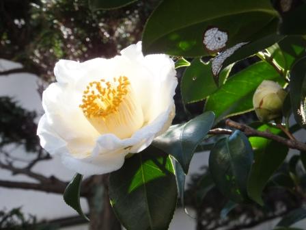 花々-21