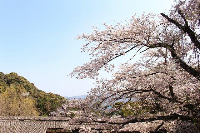 私の好きな新和の「桜名所10選」:3~5選目