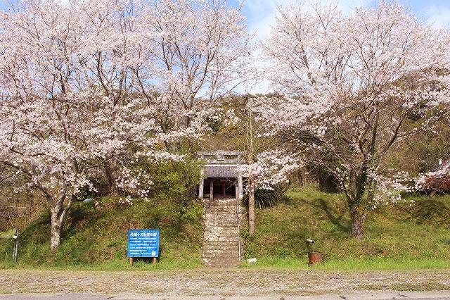 私の好きな新和の「桜名所10選」:1~2選目