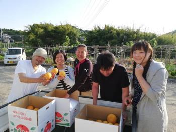産島の「うぶ柑」を知っていますか?