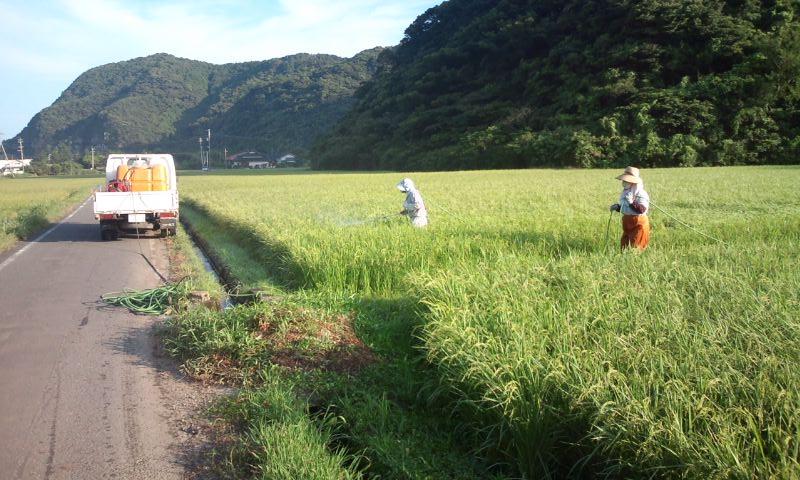 田の消毒2.jpg