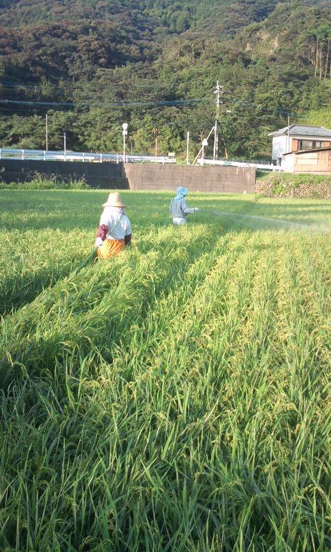 田の消毒1.jpg