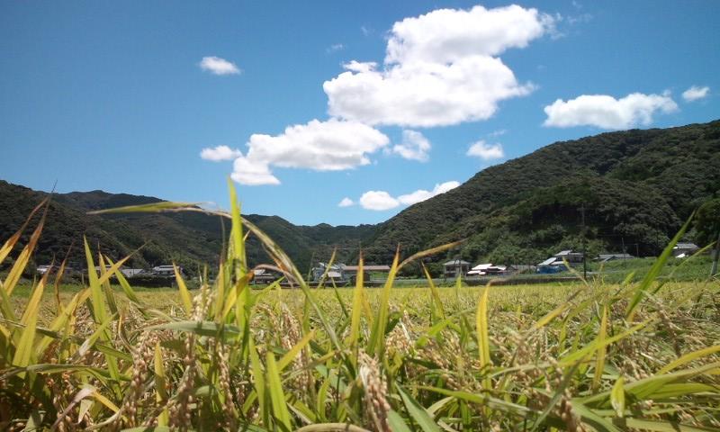 田んぼからの風景.jpg