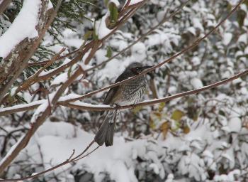 冬景色(H22.12.31