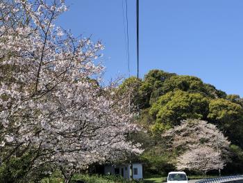 横浦島 春の風景🌸