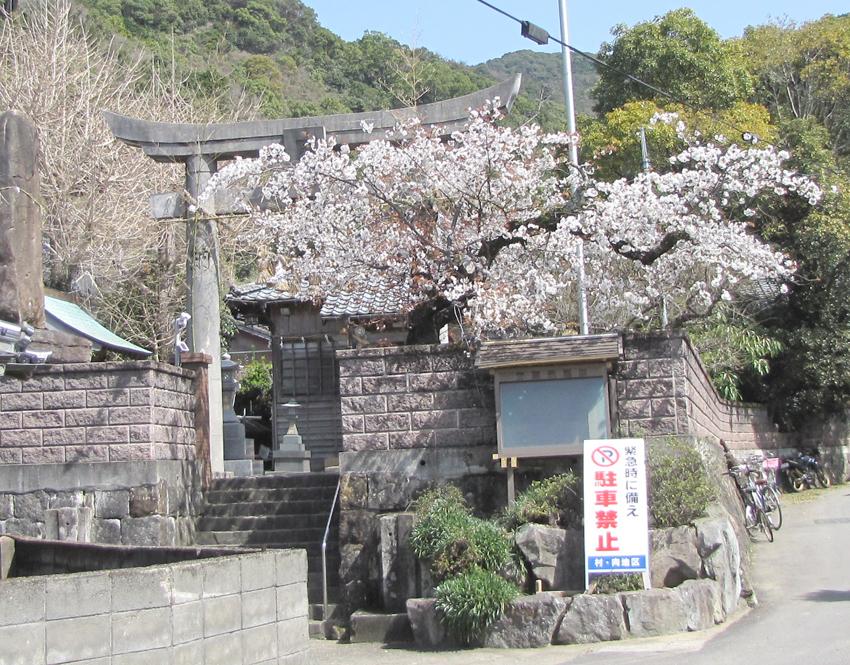 桜(h24-1)