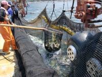 定置網漁獲