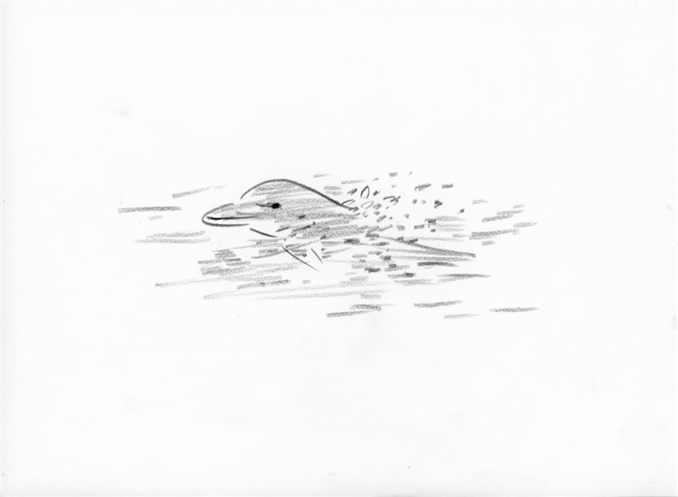 11位 イルカ(1頭)