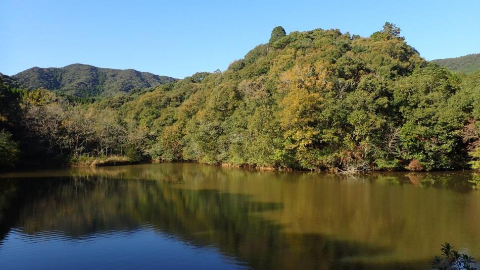 大杉のため池