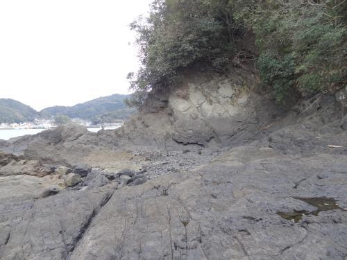 たかどの白亜紀化石