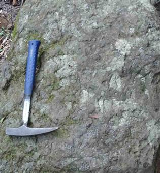巻貝化石の密集層(縮小351×380)(縮小315×341)
