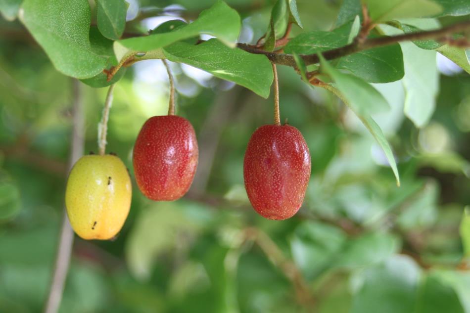 畑の果物2